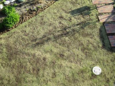 芝生の手入れ